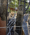 Spuren des Brandanschlags