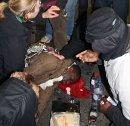 Polizeiübergriffe bei Oury Jalloh Gedenken am 7. Jänner 2012 in Dessau. Am Boden liegt Mouctar Bah, Mitgründer der Initiative und Anmelder der Demonstration. (Foto Umbruch Bildarchiv - http://umbruch-bildarchiv.de)