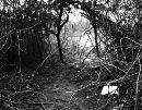 Passage (Jungle)