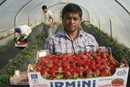 Manolada/Greece: Strawberry workers woundet by farmers